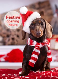 Dachshund with Santa hat on